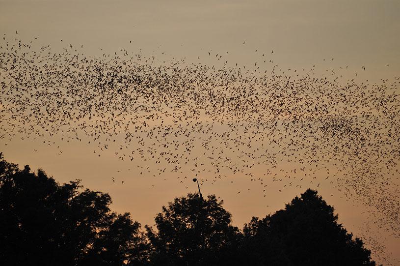 Bats for Austin